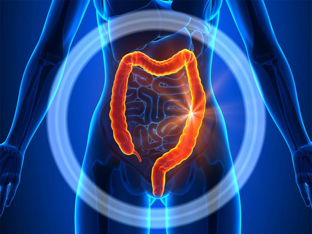 Intestinos y colon
