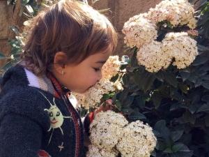 Nena olorant flors en època d'al·lèrgies