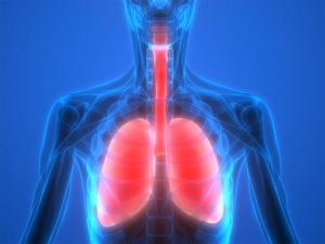Render sistema respiratorio