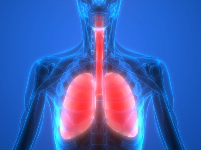 Render sistema respiratori