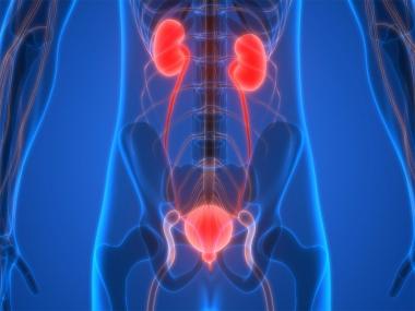 Sistema urinari masculí