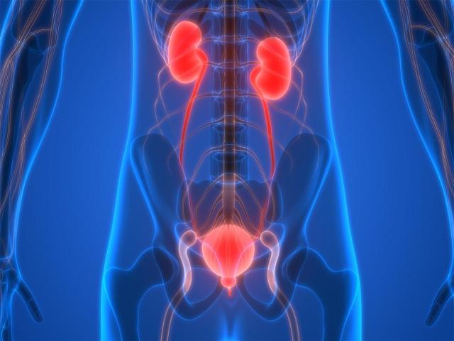 Sistema urinario masculino